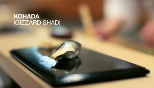 Jiro śni o sushi - Kohada