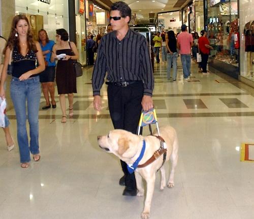 Niewidomy i pies przewodnik