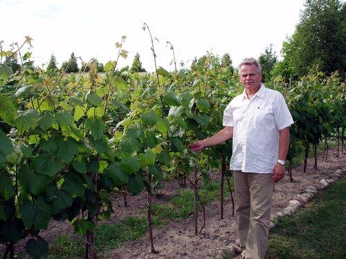 """Winnica """"Pod Orzechem"""" - właściciel winnicy"""