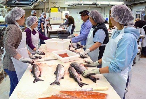 Przetwórnia łososia