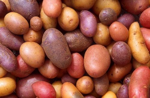Ziemniaki, kartofle